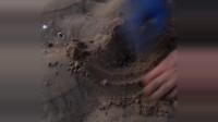 """赶海:小哥挖""""恐龙蛋"""",过程太搞笑了!"""