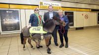 国外训练出世界上第一头导盲马,导盲犬:我这是要失业了?
