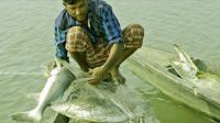 撒网捕鱼:池塘水不深但是有大野鱼,看着真过瘾!
