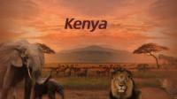 狂野非洲,肯尼亚大草原追逐野生动物之旅