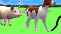 鸭子,猫,绵羊和奶牛穿上了彩色的衣服,你还能认出来吗?