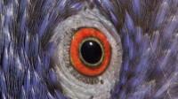动物眼中的世界,究竟是什么样子的?