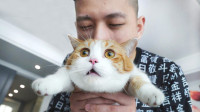 和敬汉卿挑战数猫毛,一天掉了10万根?悔不当初!