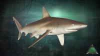 全新鲨鱼【短尾真鲨】 莱斯利解说深海惊魂