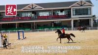 100多名骑手进行适应训练,探秘武汉军运会马术障碍测试赛