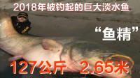 估计这是2018年被钓起的最大淡水鱼,体长竟达2.67米!