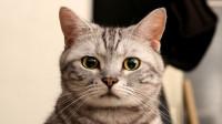 猫咪:这只小猫咪太呆萌了,这颜值瞬间征服了我,我的少女心要炸了!
