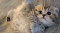 软萌可爱的小奶猫!少女心爆棚了,准备偷猫去!