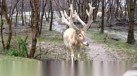游览中华麋鹿园--男博万视觉