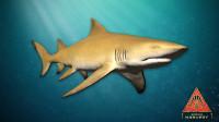 全新鲨鱼【柠檬鲨】 莱斯利解说深海惊魂