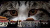 摄影师立志拍遍200只故宫御猫,云吸猫重度患者:羡慕!