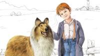 我对苏格兰牧羊犬的美好印象,全部来自《灵犬莱西》这部感人电影!