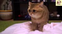 可爱小猫,在线踩奶!萌化你的少女心!