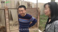 """实拍:农村宠物狗养殖基地,除了神犬小七,还有这4种""""网红狗"""""""