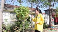 良村美景:村民家的小树上被挂上了枫叶状的装饰物,还挺好看的