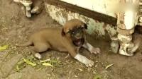 男子救了只被主人抛弃的小狗,狗狗饿得在地上趴着,