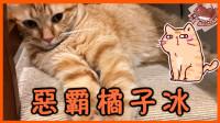 【巧克力】『橘子冰的日常』- 恶霸橘子冰
