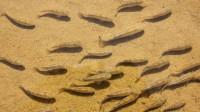 """世界上""""不正经""""的沙漠,湖泊成片鱼虾成群,太不给沙漠面子了"""