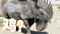 动物混合模拟器,鸡和犀牛这是不是真的?时空小涵
