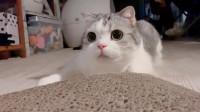 别人家的猫咪,光是看看眼睛就觉得萌化了