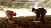 新型职业农民:回乡种草莓 培训出效益 黑土地 20190519 高清