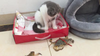 当螃蟹爬到猫咪脚下时,下一秒千万忍住不笑!