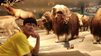 小伶玩具坤坤带大家去看恐龙会动的自然博物馆,好期待? !伶可兄弟