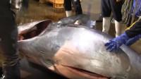 世界上最昂贵的鱼,据说一条能卖出千万天价,可以在北京买别墅了!