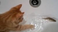 看着可爱的小鱼,橘猫起了心思,竟然做出这样的事