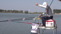 白条游钓高新大塘,秋季用饵选择很关键,饵料变换终上鱼