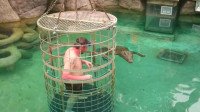 男子隔着笼子挑衅鳄鱼,下一秒意外发生,镜头拍下全过程