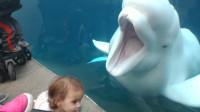 白鲸和孩子之间会发生哪些有趣的事呢?一起来见识一下吧!