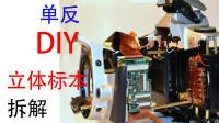 上世纪产品,佳能EOS300 拆解,3D标本制作