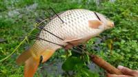 牛人用鱼叉插鱼,鱼这么可爱怎么下得去手,烤着吃是不是更香?