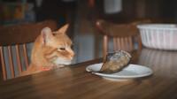 熬夜的猫咪面容憔悴,看着最爱的鱼干也没胃口,可真是可怜