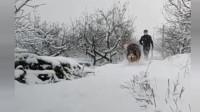 """看样子阿拉斯加很喜欢下雪啊!网友:骗人!这明明是""""阿拉斯猪"""""""