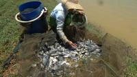 荒废鱼塘的罗非鱼泛滥,小池抓到爆桶,重达几十斤