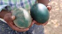 大爷捡到三颗蛋,带给母鸡孵化,孵出的东西连警察都上门了
