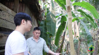 红木为啥卖这么贵?第一次看到小叶紫檀,800年才成材,拍于老挝