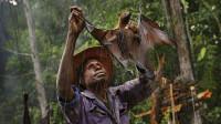 雅可族原始部落,深夜丛林狩猎果蝠,连皮带毛直接烤着吃!