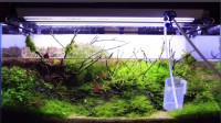 水族鱼缸日常,草缸换水维护解析