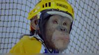 小猴子参加比赛受到诬陷,出走后队友急疯,看它如何继续大展猴威