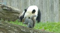 袭击国宝还抢熊猫镜头,该当何罪?