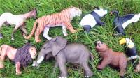 认识大老虎等8种陆地动物,小马识动物