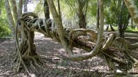 """地球上年纪最大的3棵树,第1棵活了九千多年,第3棵会""""流血"""""""
