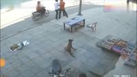 狗狗发现主人有危险,反应厉害了!