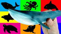 小动物玩具介绍认识北极熊虎鲸