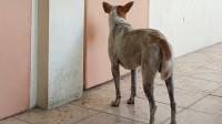不知人类好友已去世,小狗每天教室外等他下课