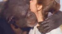 28岁美女和大猩猩结为夫妻,婚后美女的行为让人难以理解