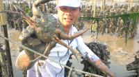 阿烽去海蛎田深处赶海,里面的蟹洞又大有深,挖出的那一刻爽翻了
